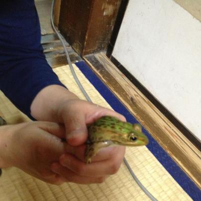 座敷にやってきた不思議な蛙