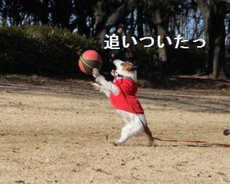 kinuta3.jpg