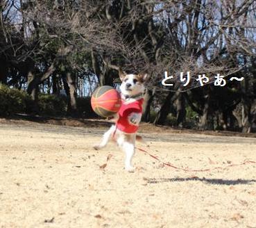 kinuta4.jpg