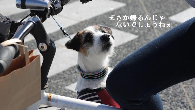 komazawa3.jpg