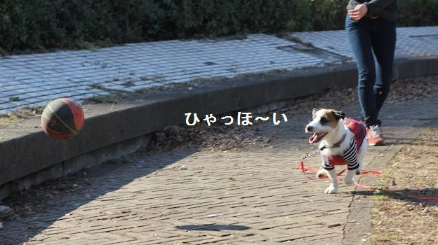 komazawa4.jpg