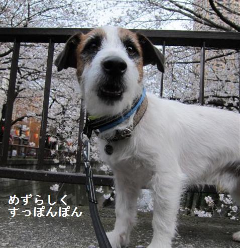 nakame2.jpg