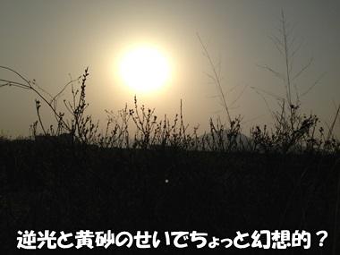 201303117.jpg