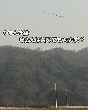 201303119.jpg