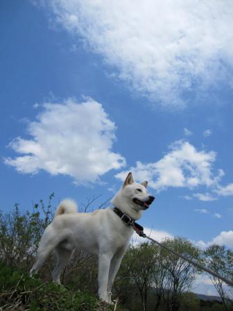 今日は雲が楽しい空