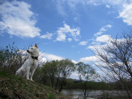 石狩川の水はまだ多め