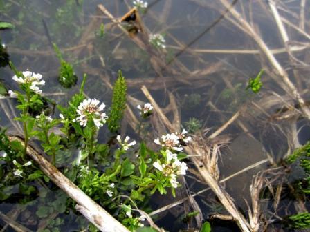 花も水中花になってたよ