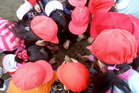 2006-06-30 24年度11月中学生職場体験学習、たき火、焼き芋 023 (800x536)