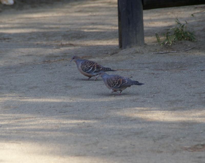 2006-09-13 24年度野鳥 002 (800x639)