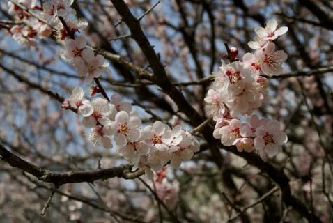 2006-10-12 24年度キュボロ、お別れ遠足城址公園3月13日 041 (800x535)