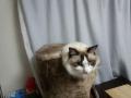 cat2014120500.jpg