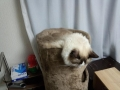 cat2014120501.jpg