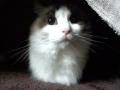 cat2014120701.jpg