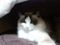 cat2014121000.jpg