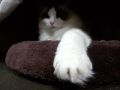 cat2014121003.jpg