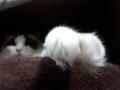 cat2014121004.jpg