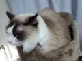 cat2014122000.jpg