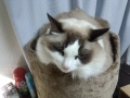 cat2014122002.jpg