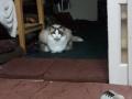 cat2014122003.jpg