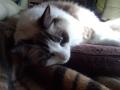 cat2014122005.jpg