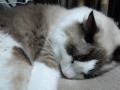 cat2014122100.jpg