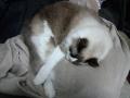 cat2014122101.jpg