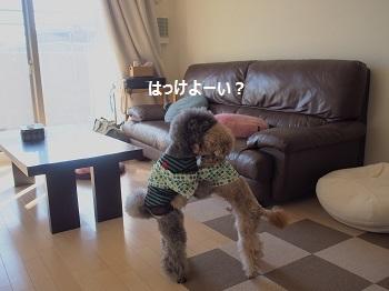 といぷー相撲部