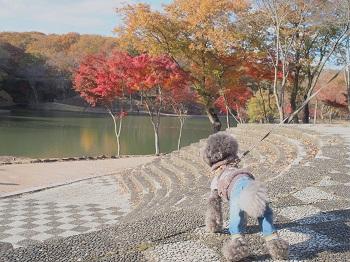 北山公園紅葉1