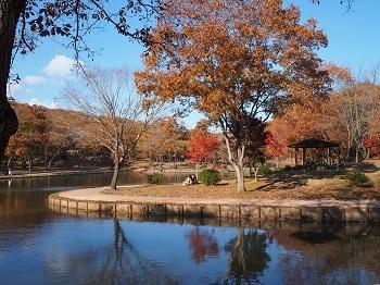 北山公園紅葉5