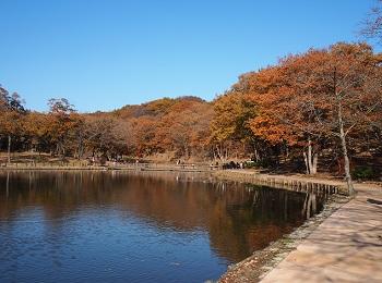 北山公園紅葉6