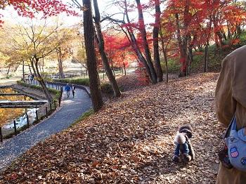 北山公園紅葉10