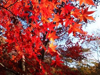 北山公園紅葉11
