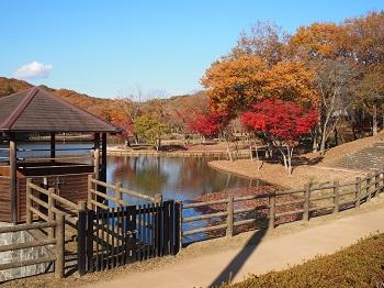 北山公園紅葉