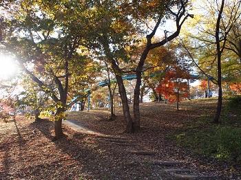 北山公園紅葉13