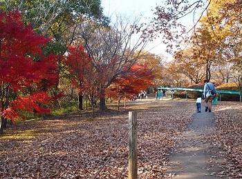 北山公園紅葉15