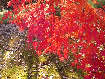北山公園紅葉16