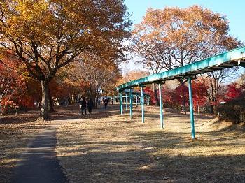 北山公園紅葉18