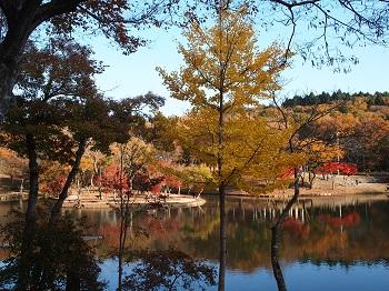 北山公園紅葉24