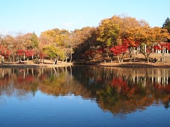 北山公園紅葉26