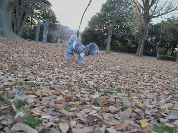 柏の葉公園その7