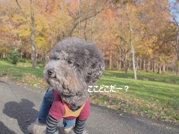 水元公園-1