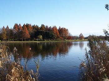 水元公園-29