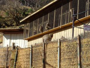 12.12.03 京都旅行 006