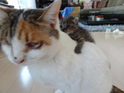 子猫成長6