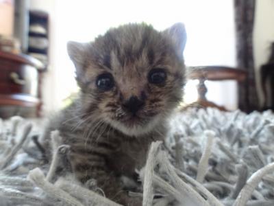 子猫成長5