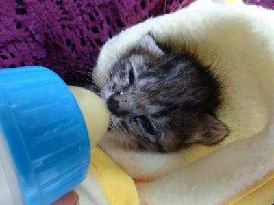 子猫成長3