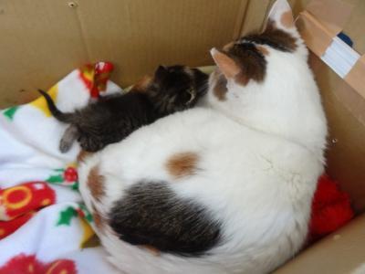 子猫成長2