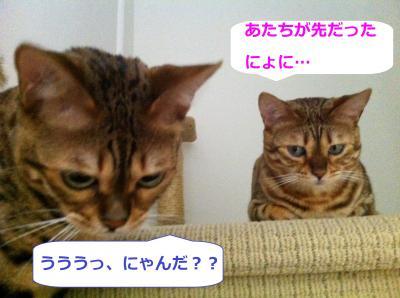 BB2_20120531141333.jpg