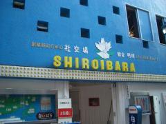siroibara.jpg