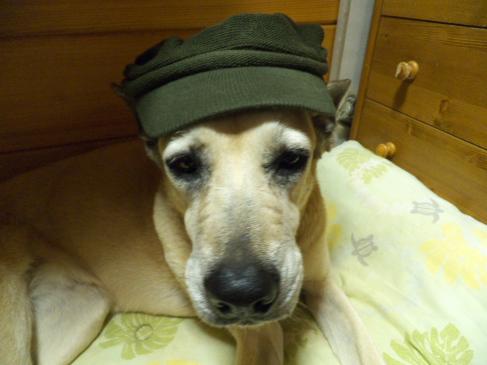 帽子すきのルン